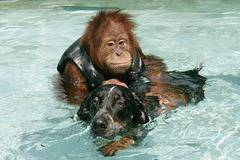 Funny: Friendship between a monkey and a dog (4 Pics)