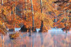 Great Fall Photographs (59 Pics)